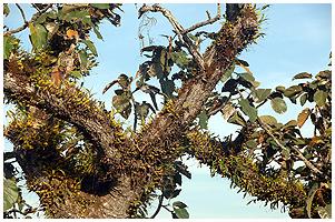 orkide i naturen